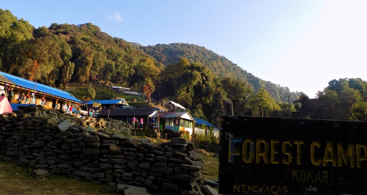 Forest camp (3,050m)