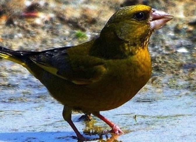 birding tour in Nepal