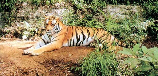 Encounter Himalayas Wildlife Tour