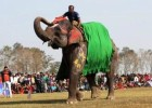 Elephant race attracts tourists in Chitwan National Park