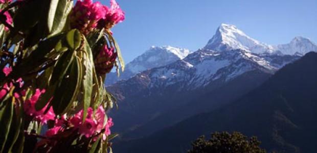 mountain honeymoon tour
