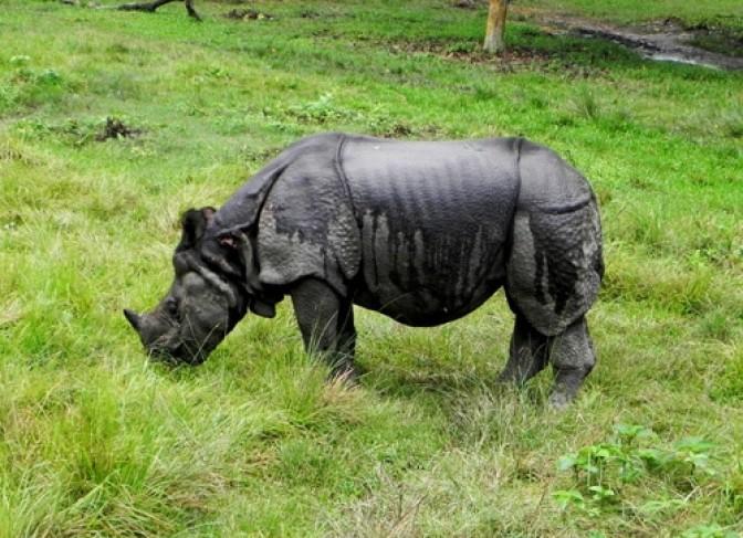 chitwan national park