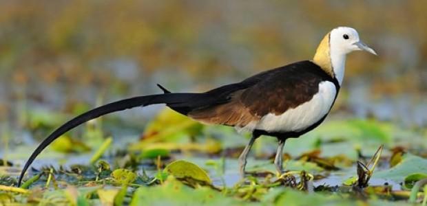 Best of Bird Watching tour in Nepal