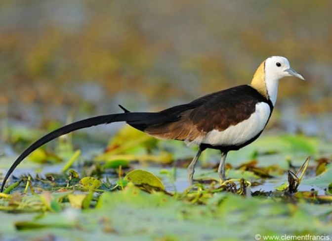 Best-of-bird-watching-tour-in-Nepal-4