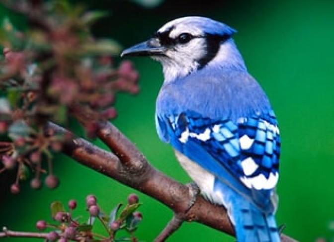 Kathmandu-valley-bird-watching-tour-2
