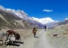 Top 5 treks to do in Summer in Nepal