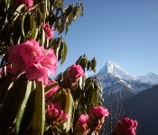 Amazing Dhaulagiri view from Poon hill
