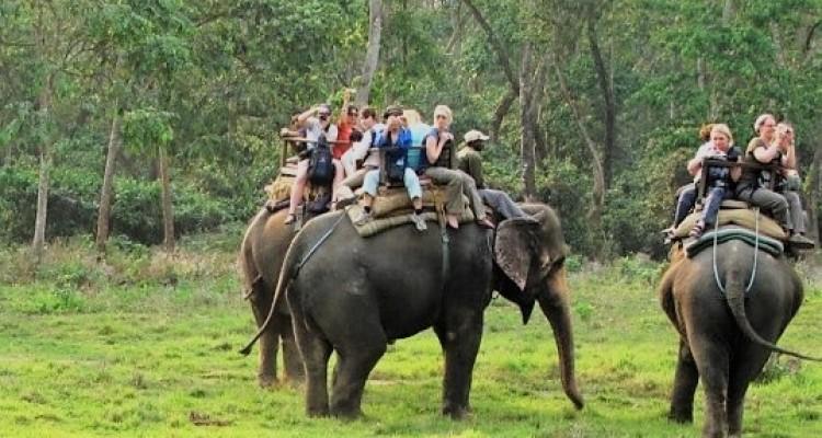 Jungle Safari in Chitwan National Park