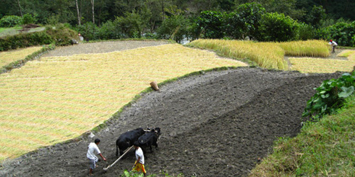 The farmers are digging and plugging on the fertile land