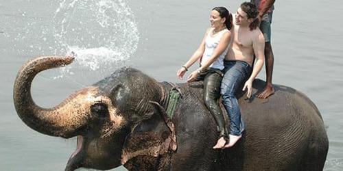 Nepal honeymoon tour- Elephant shower in Chitwan National Park