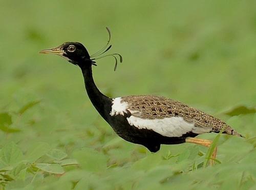 Best of Bird Watching tour in Nepal Tour- Bird Watching Tour Package