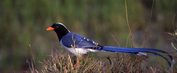 Kathmandu valley Bird Watching Tour - Bird Watching Tour Package in Nepal