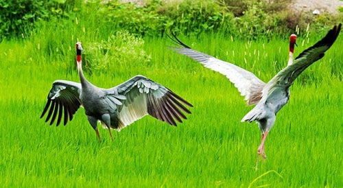 Eco Holiday in Nepal- Bird watching in Nepal