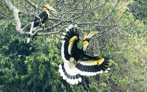 Nepal Bird watching Tour in Nepal - Koshi Tappu Wildlife Reserve