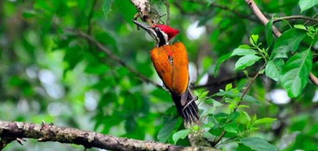 Nepal bird watching highlight Tour- Bird watching tour in Chitwan National Park
