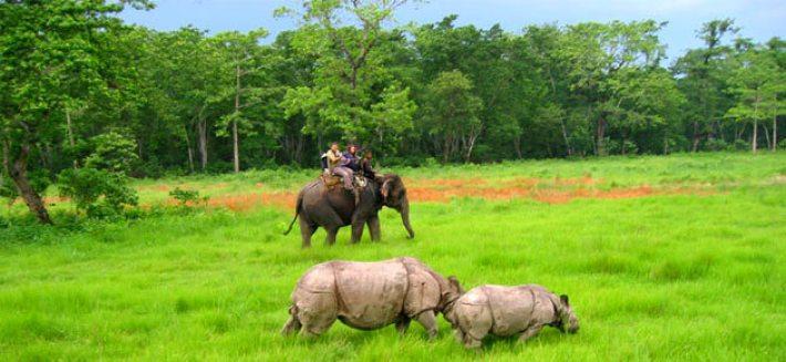 Jungle safari Nepal-Elephant riding in Chitwan National Park